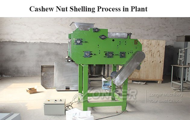 Cashew Nut Shelling Process in Plant